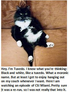 An important message from your cat