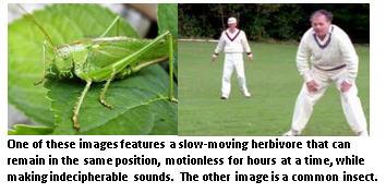 Cricket - comparison