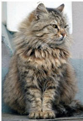 Catmatch - Princess