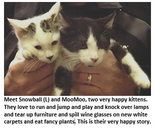 The Very Happy Story of Snowball and MooMoo