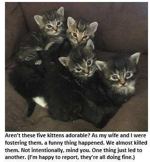 How to (Almost) Kill Kittens Without Really Trying