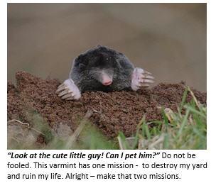 My Personal War with a Backyard Mole