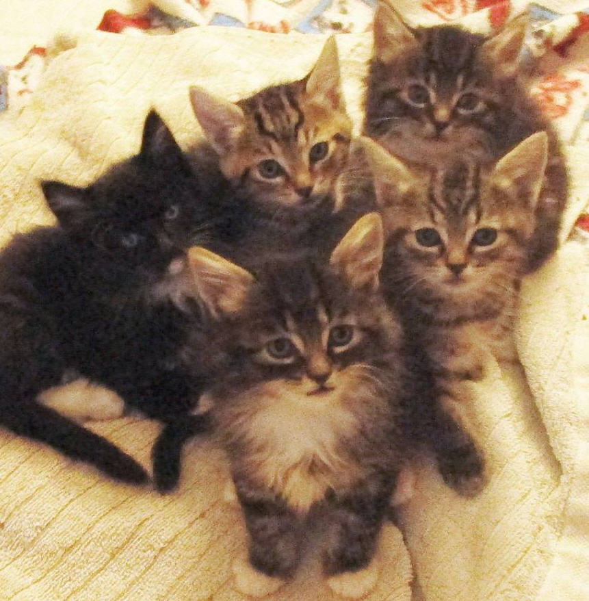 """My wife and I foster kittens several times a year. Here are some of our recent guests. I know, they all look so adorable. Don't be fooled. They're non-stop eating, pooping machines that will turn your house into utter chaos, or as my wife calls it, """"happy pandemonium."""""""
