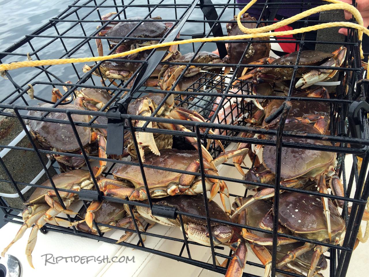 How I Got Crabs